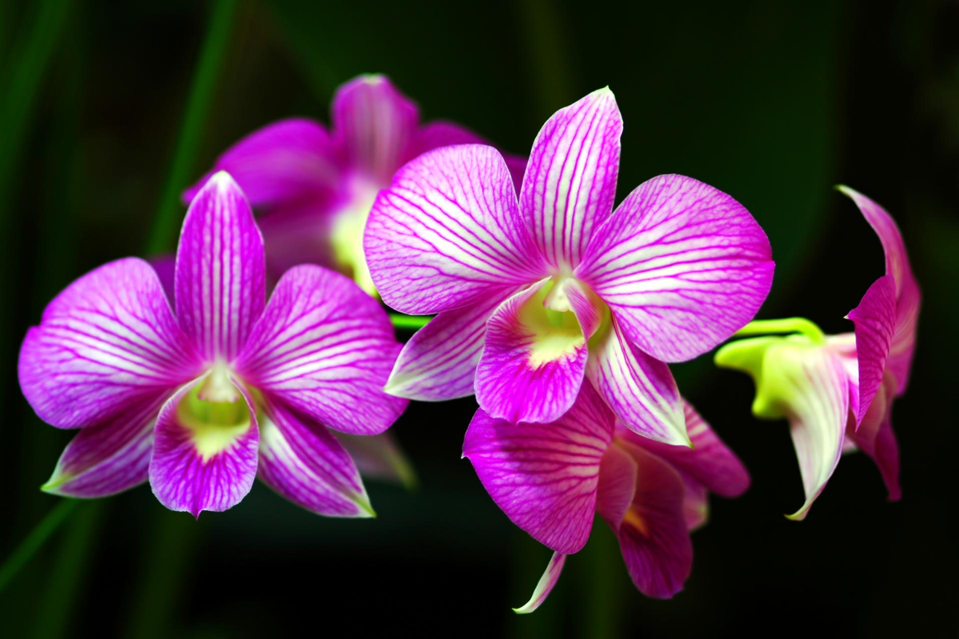 Orchid Evolution